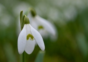 Home snowdrop helping children to achieve their potential donate fandeluxe Image collections